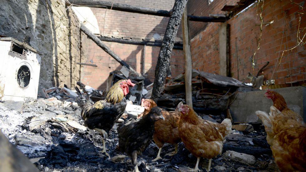 Así ha quedado lazona afectada por el incendio de Trives.Varias personas con linternas durante las operaciones de búsqueda del desaparecido.