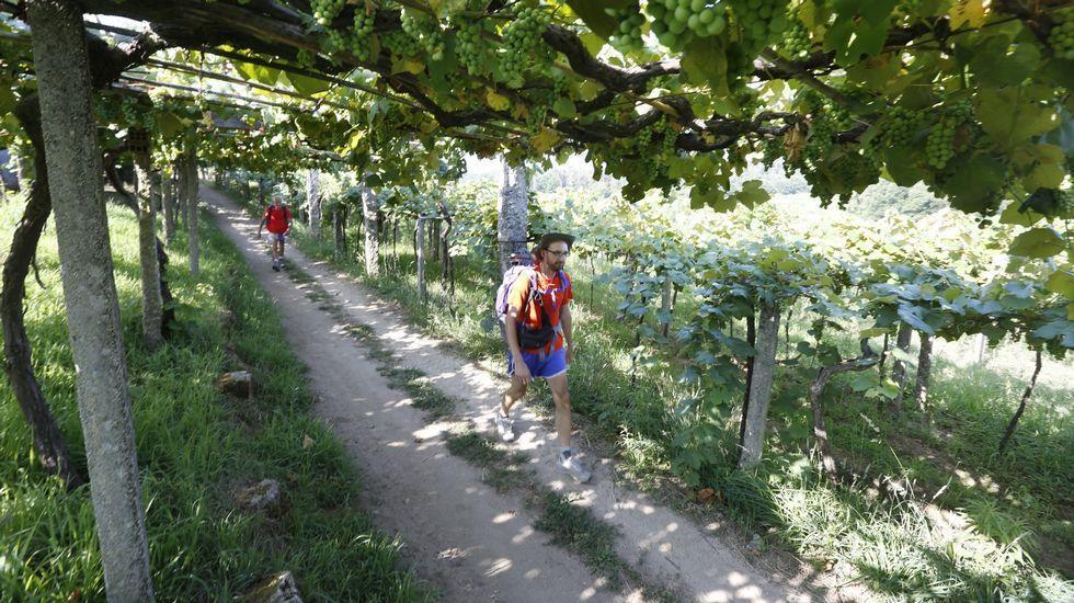 Peregrinos en el Camino Portugués, a su paso por Valga.