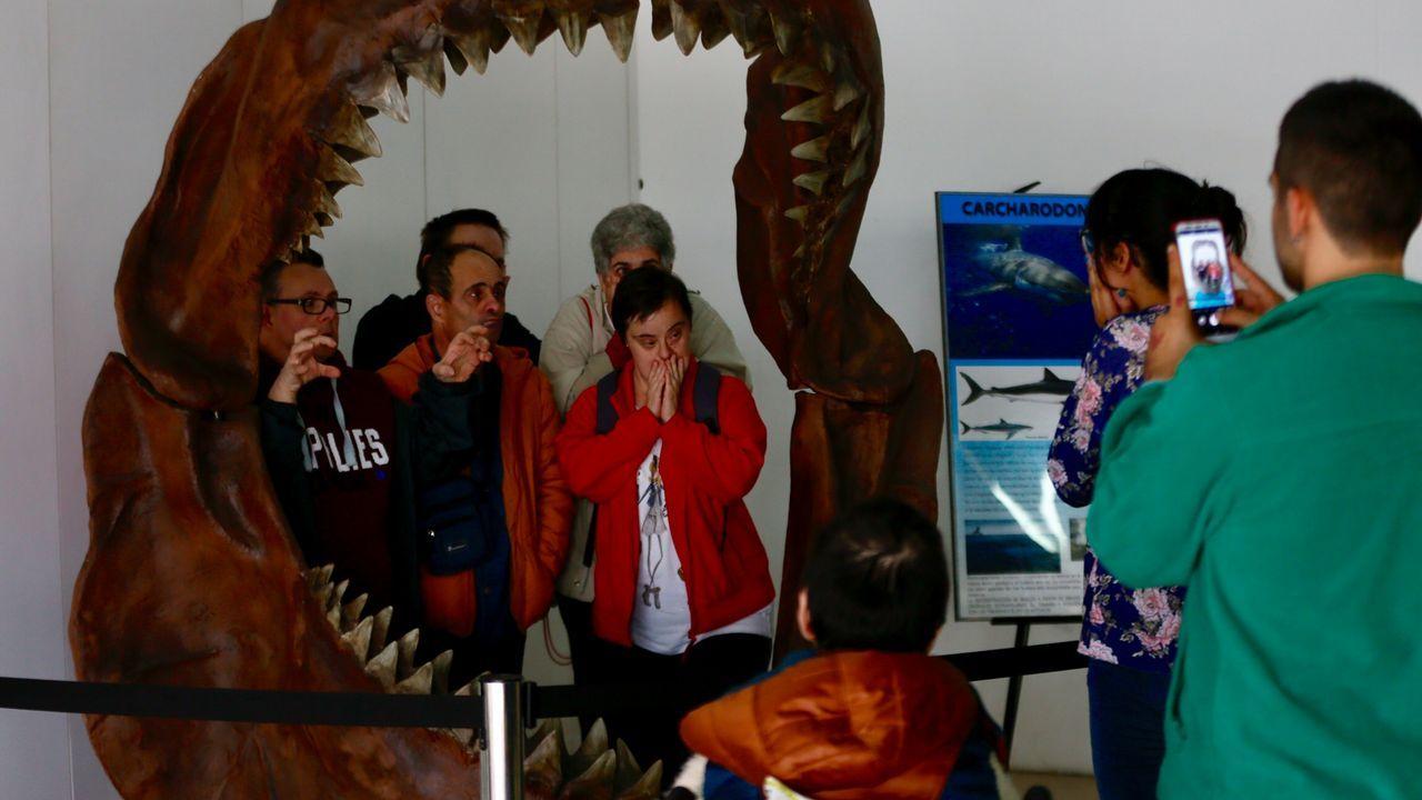 La mandíbula de un tiburón extinguido, atraccion de Minervigo.María Méndez con el Real Oviedo