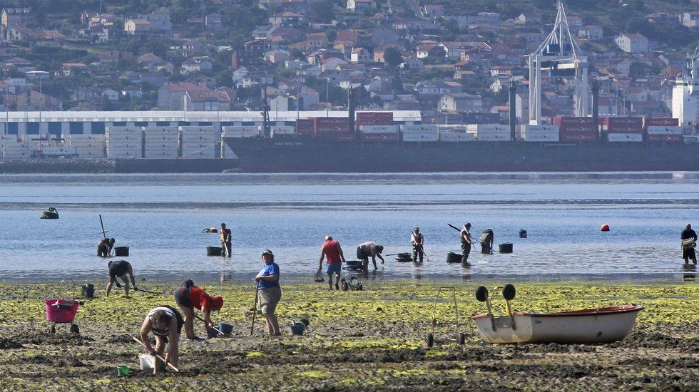 Extracción de mejilla.La primera subasta de bonito de la campaña 2020 en la lonja de Gijón