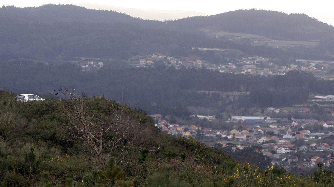 Eucaliptos talados en Castrillón