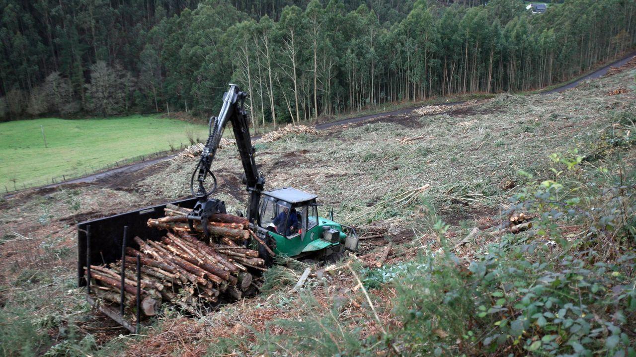La actividad forestal ha ido en aumento últimamente en muchos municipios de Galicia
