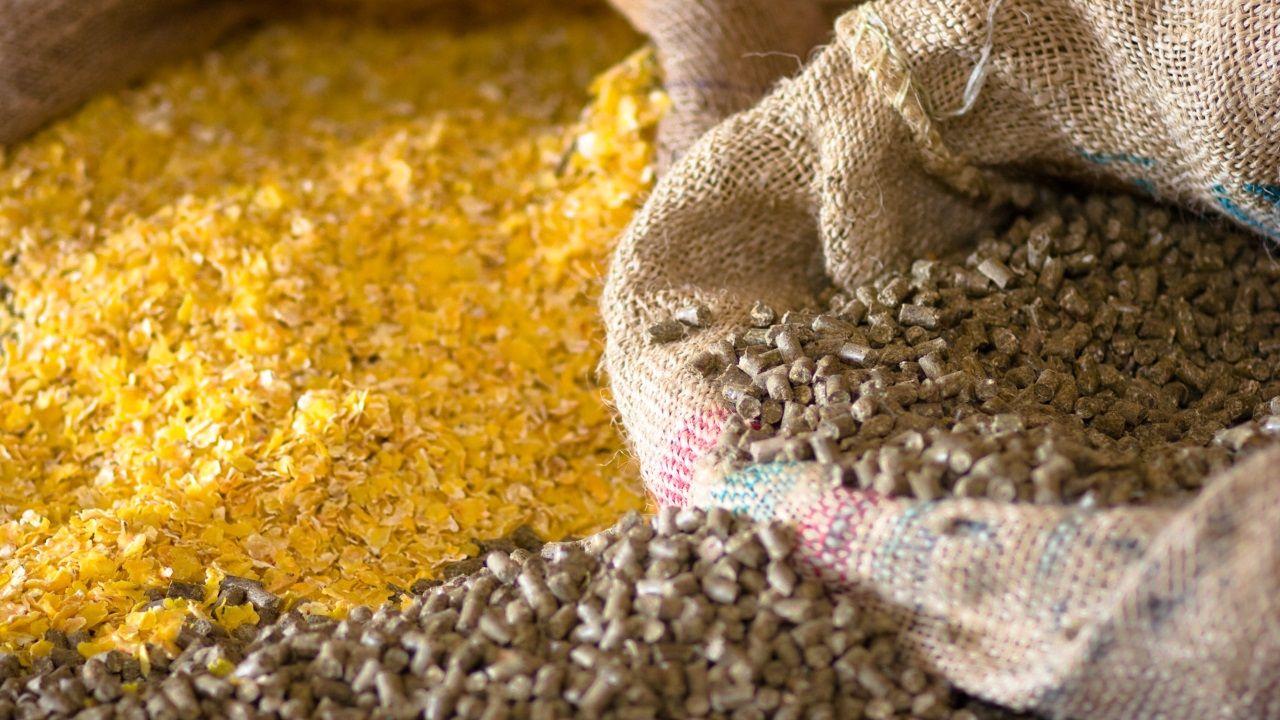 Imagen de un campo de maíz en mazaricos afectado por la falta de lluvia