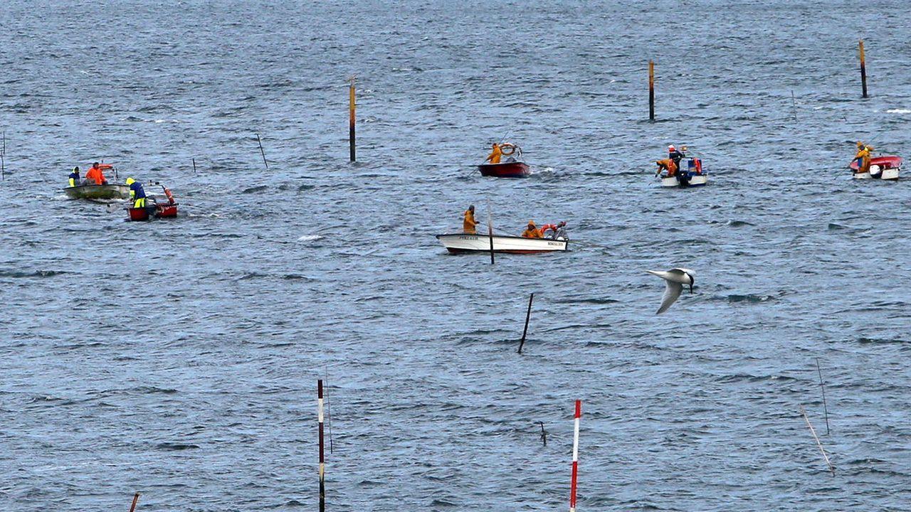 Mariscadores como estos que faenan a flote en Carril y otros miles que extraen moluscos a pie se han quedado sin sus principales clientes, la hosteleria, cerrada por la crisis del coronavirus