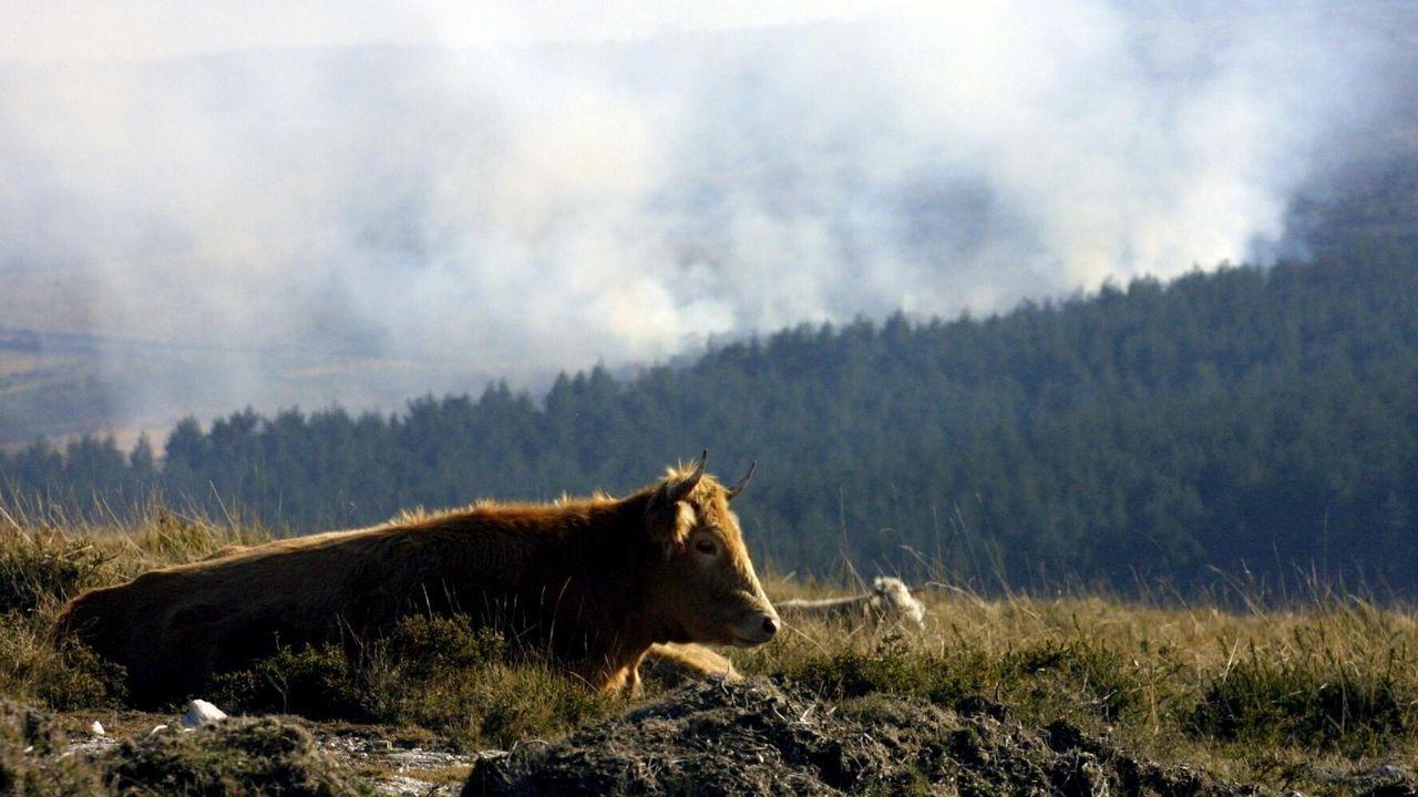 Imagen de archivo de un incendio invernal, de diciembre del 2001, en montes de Verín
