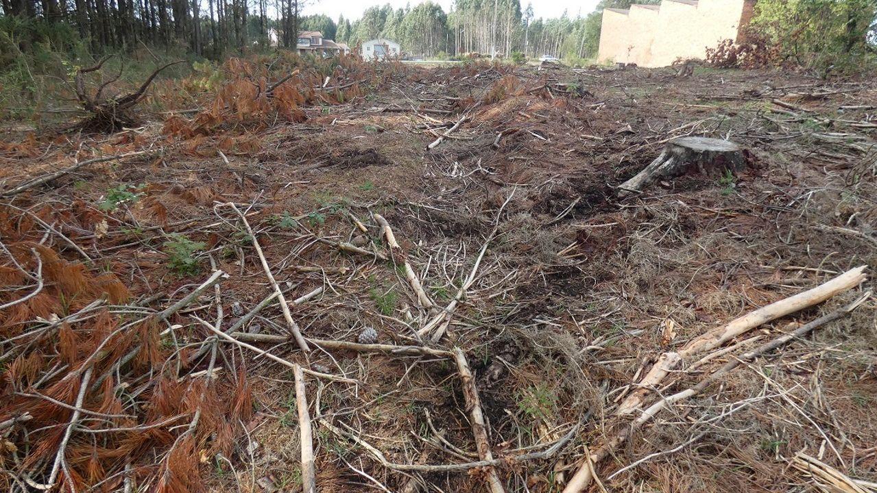 Protesta de los trabajadores de Alu Ibérica.Los trabajos forestales afectaron a la necrópolis de A Millarada, en Cospeito