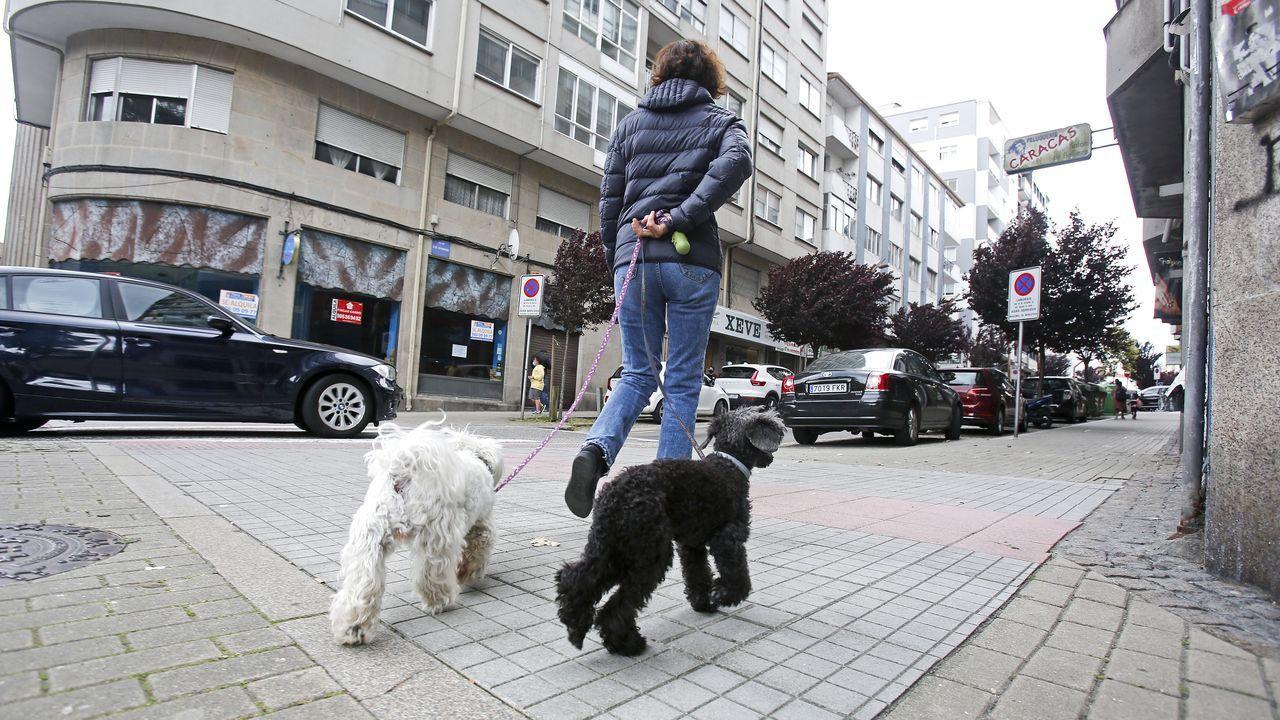 Una mujer paseando a sus perros, ayer, por una calle de Pontevedra