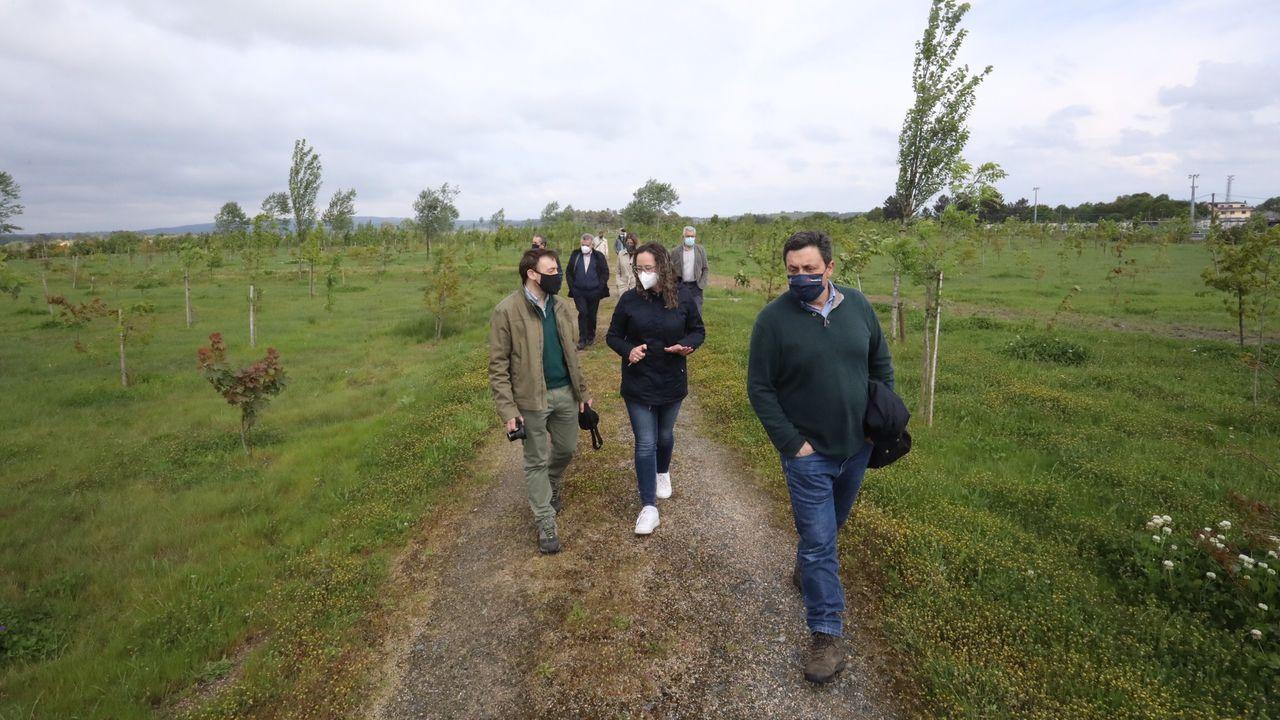 Visita de un monitor de la Comisión Europea al bosque de As Gándaras, del proyecto Life Lugo+Biodinámico
