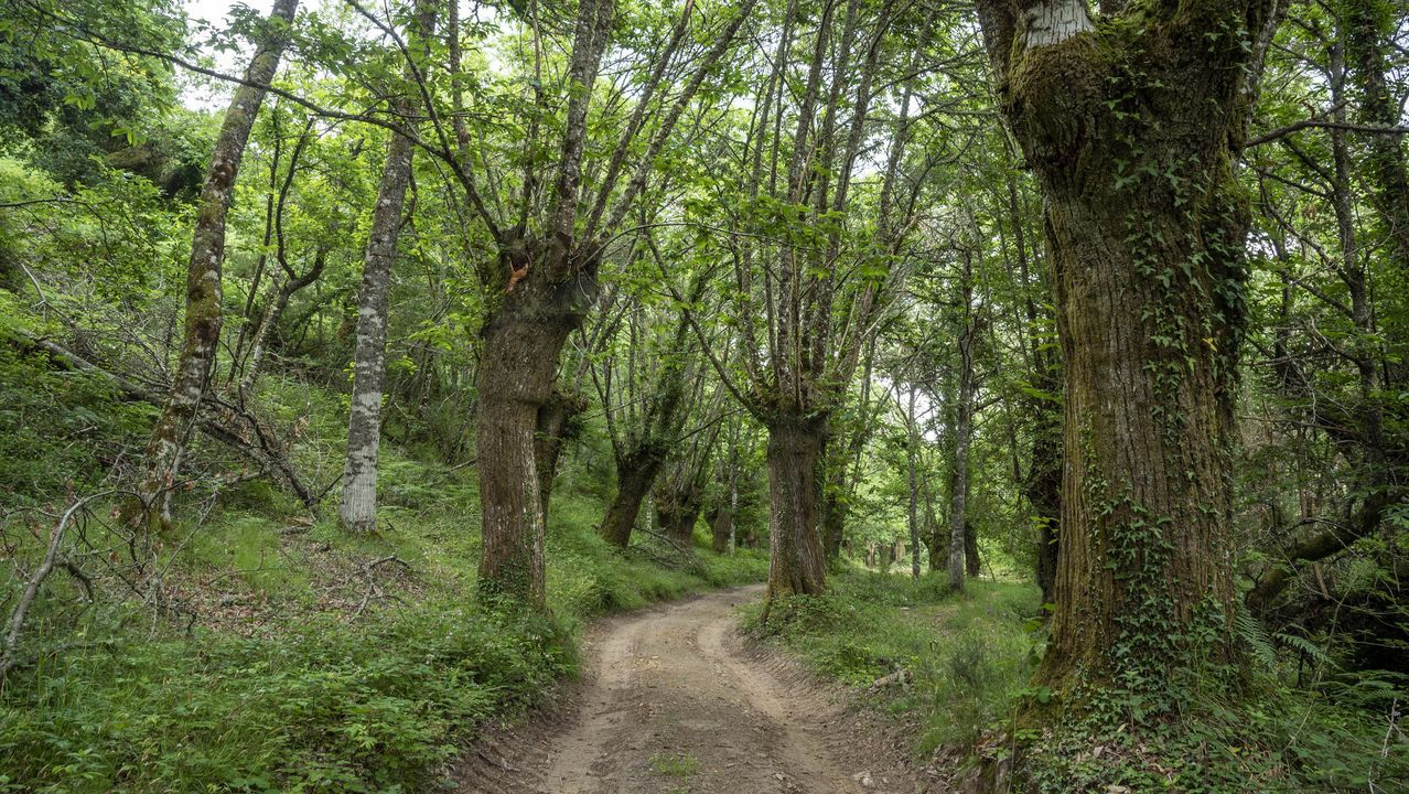 Una caminata visual por la Ruta de la Encomienda.Un tramo del camino discurre por el Souto da Fonte do Val