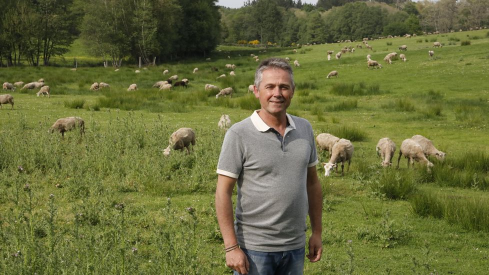 Proponen que Lugo limpie sus zonas verdes con ovejas y cabras.Diego en medio de las ovejas que trasquiló hace un mes. Él fue uno de los que aceptó la oferta de diez céntimos por vellón