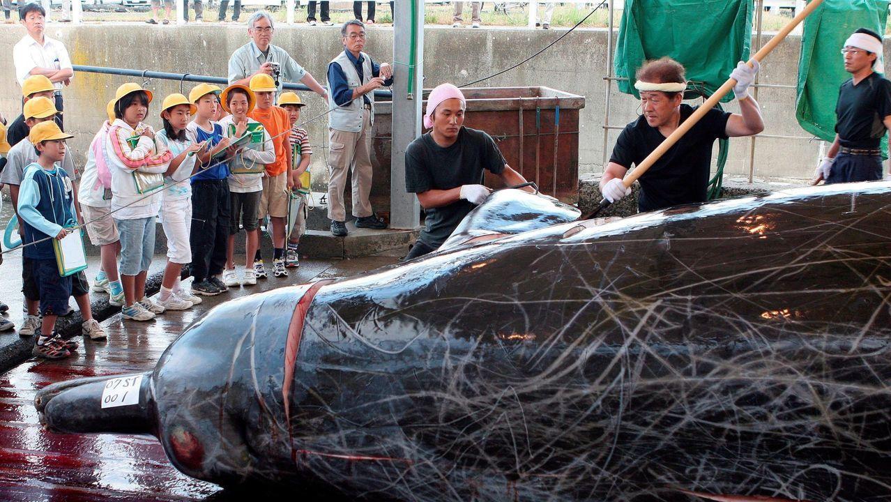 pez raro.Fotografía de archivo realizada el 21 de junio de 2007 que muestra la matanza de una ballena zifio en el puerto Wada en la prefectura de Chiba en Japón