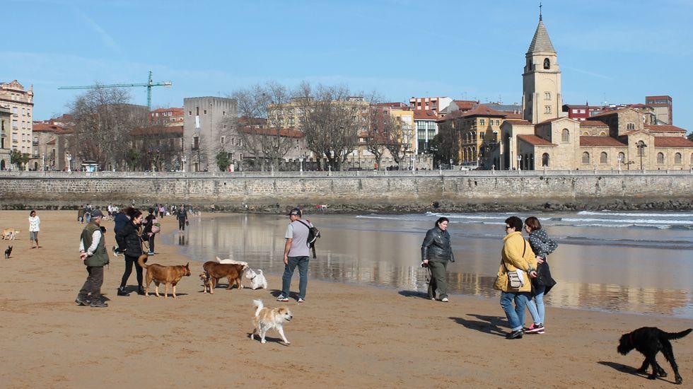Así era el Gijón de los años 50.Propietarios de perros con sus mascotas en la playa de San Lorenzo