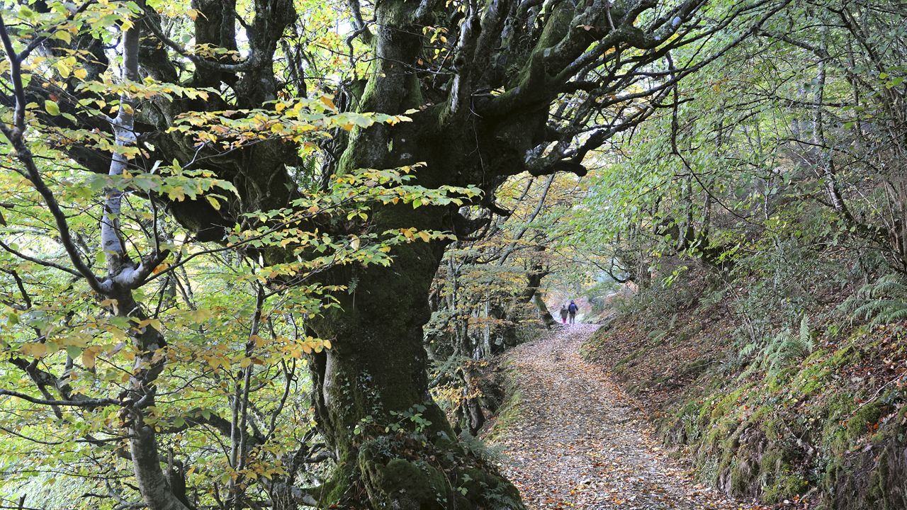 Bosque de Moal