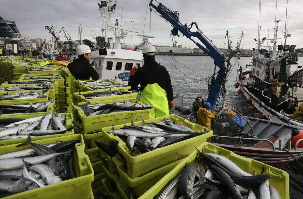 Save a hater.El cerco reclama más cuota de xarda (en la foto una descarga en A Coruña), jurel y sardina.