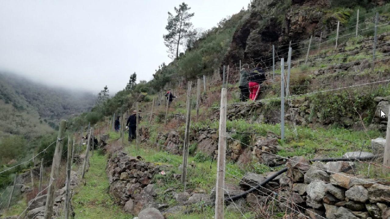 El Calvo Xiria-Carnes do Ribeiro, en imágenes.En las prácticas participaron estudiantes de ciclos formativos de vitivincultura y de aceites y vinos