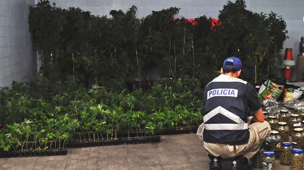 Dos mil plantas de marihuana enganchadas a la luz general en Cualedro.Nieva con intensidad en Castro Caldelas