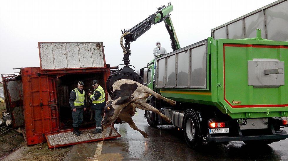 Vuelca un camión cargado de animales en la N-540.El concejal José Luis Losada, ayer en Baamorto con la urna que no hizo falta utilizar