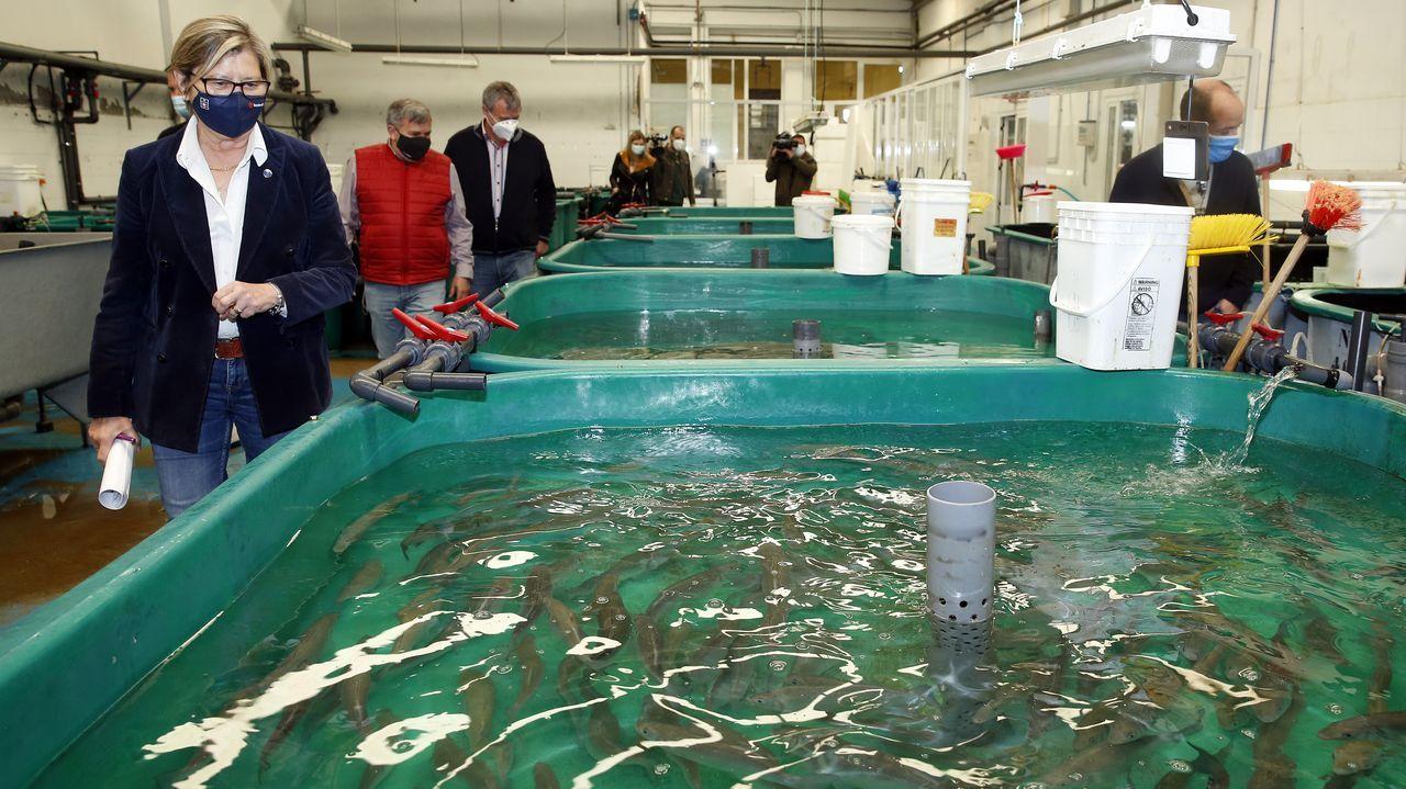 Rosa Quintana visitó las instalaciones del Clúster de Acuicultura en Ribeira