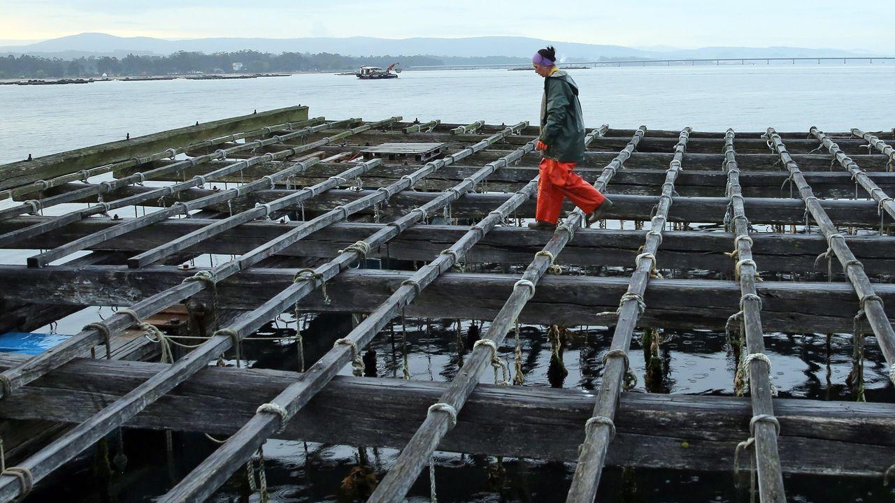 Calibre para marisco en A Illa
