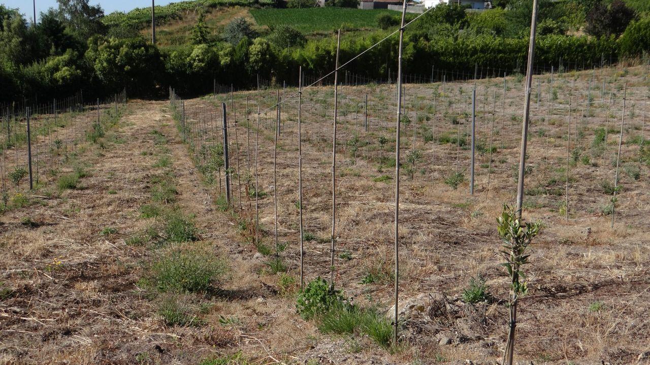 ¿Cómo podrá salir reforzado de la pandemia el sector del vino en Galicia?.El coronavirus ha entrado en 70 centros educativos de Ourense