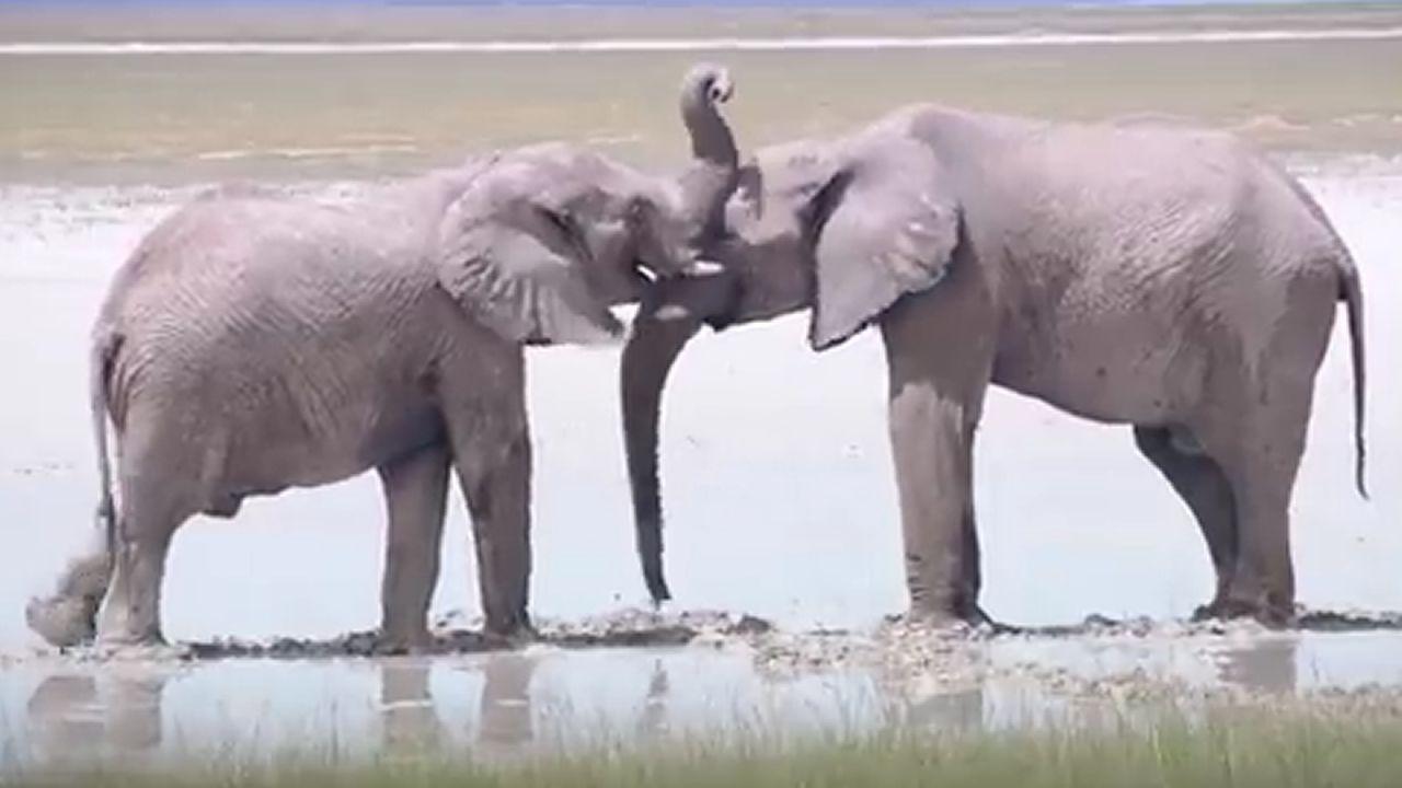 Así es Namibia, el maravilloso «país de mierda».Penny Mordaunt, ministra de Cooperación Internacional
