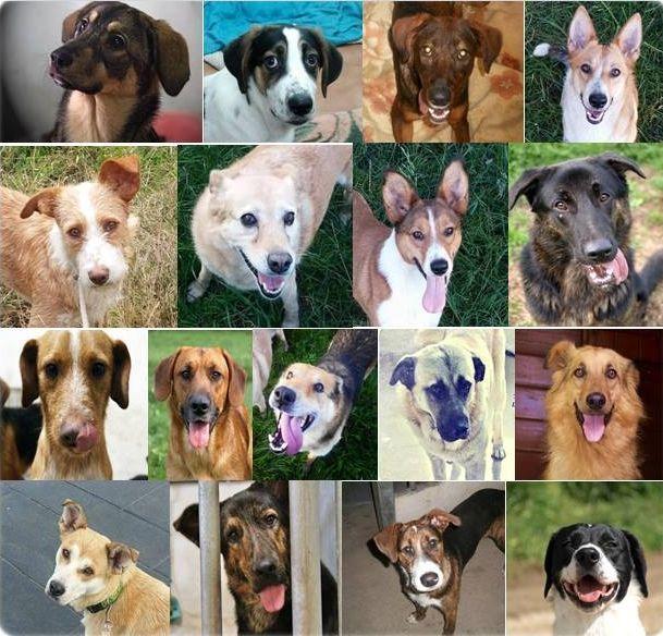 Y tú... ¿qué querías ser de mayor?.Peludos sen Fogar difundió ayer las imágenes de sus diecisiete canes.