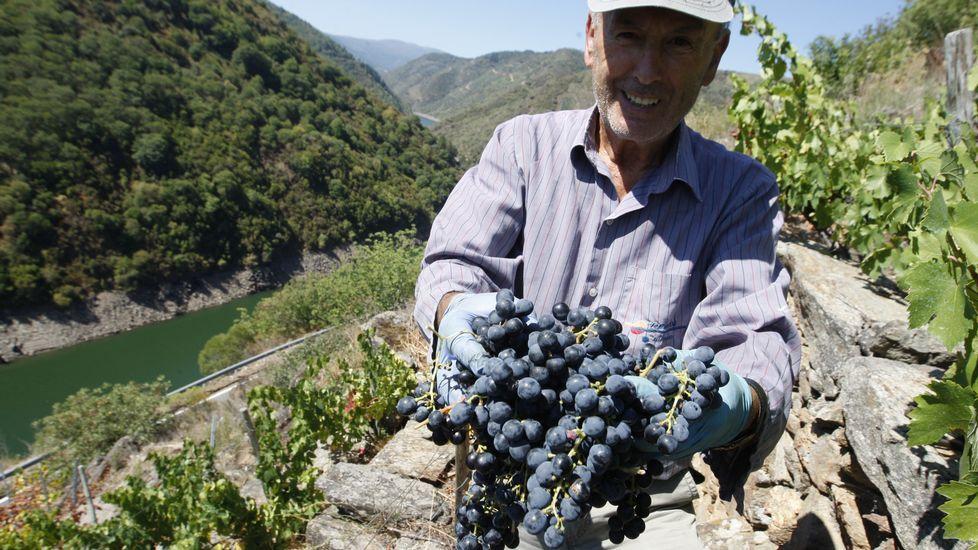 Estado de emergencia en las viñas