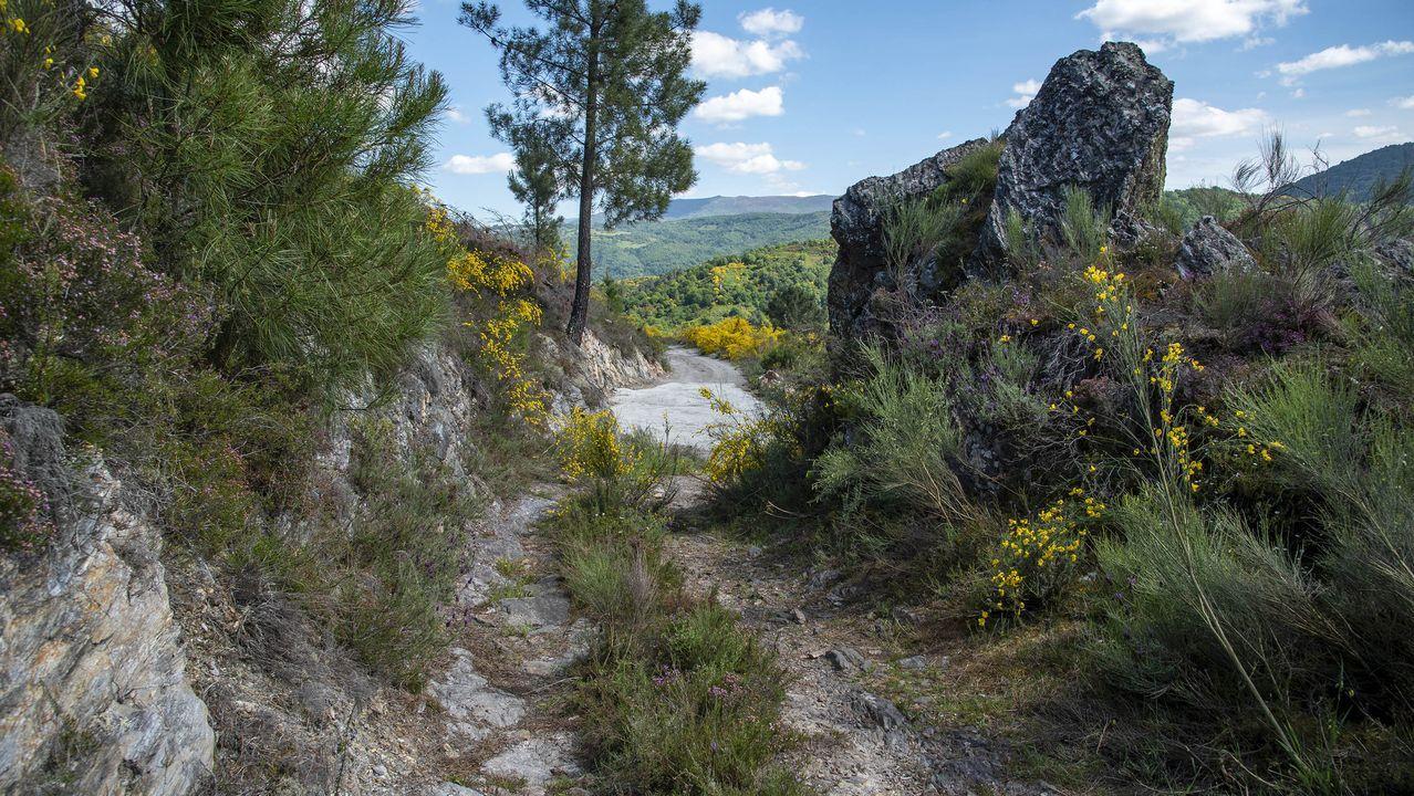 Un tramo del camino de San Amaro, por el que discurre parte de la ruta