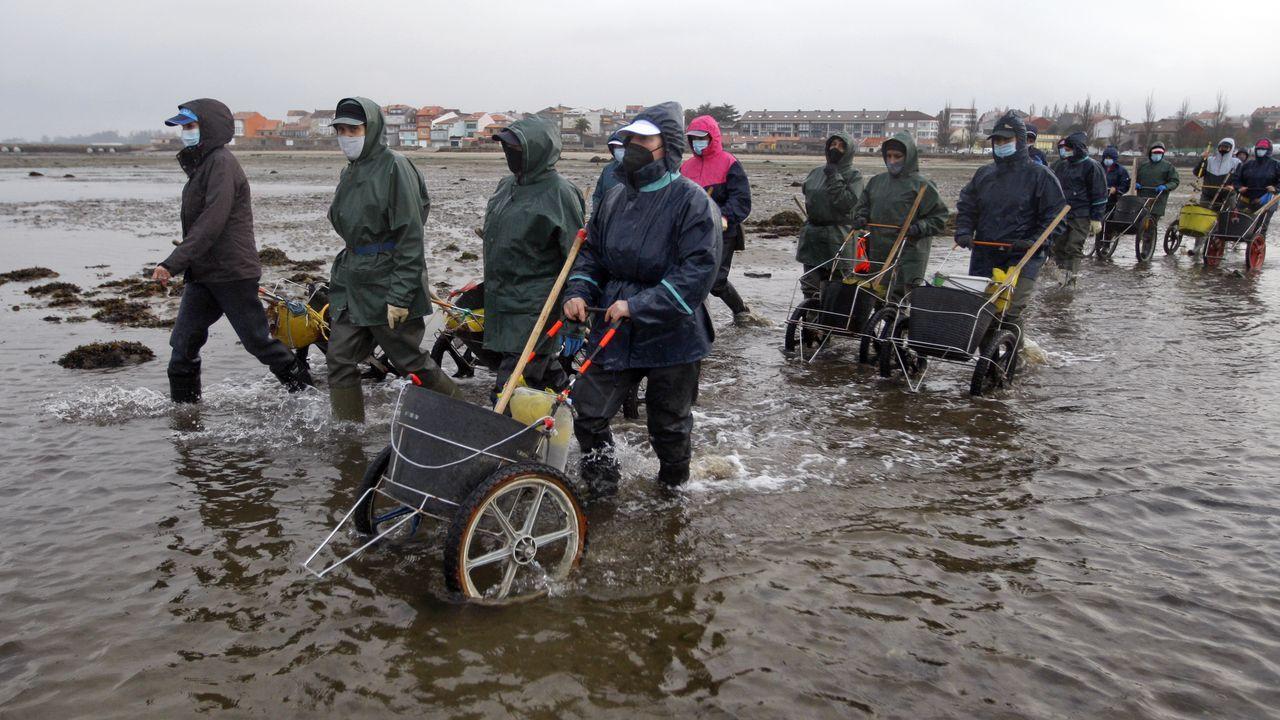 Figueiras se jubila.Las mujeres son mayoría en el marisqueo a pie en Galicia, como estas de Arousa, yendo a faenar el pasado día 1