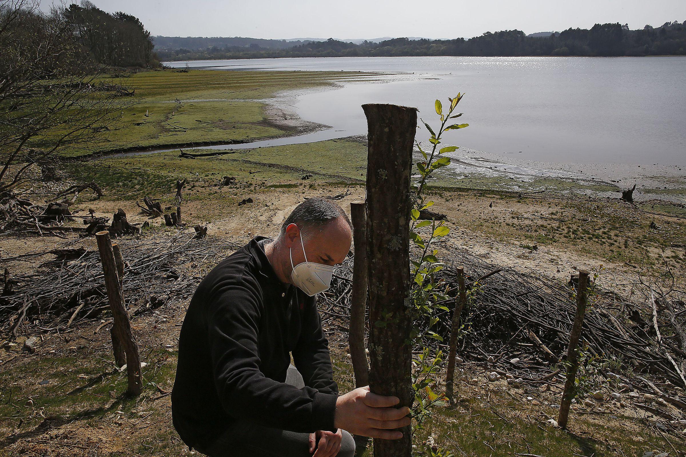 Miguel Fernández muestra el sistema de repoblación consistente en clavar en la tierra estacas procedentes de la poda de salgueiros. Ya se observan los primeros brotes