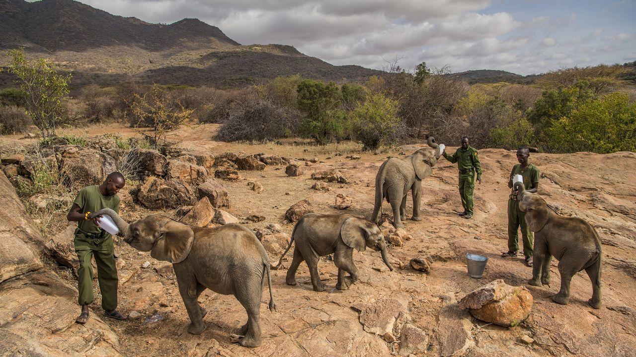 Fotografía cedida por la organización World Press Photo que muestra la imagen captada por la fotógrafa Ami Vitale, ganadora del primer premio de la categoría «Nature - Stories». La foto muestra a un grupo de trabajadores alimentando elefantes bebés en el Santuario Reteti Elephant, en el norte de Kenia, el 11 de febrero del 2017.