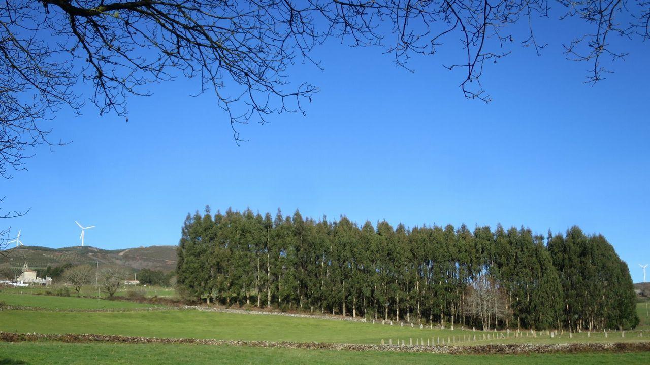 Las plantaciones de eucalipto representan el 3% de la superficie forestal española