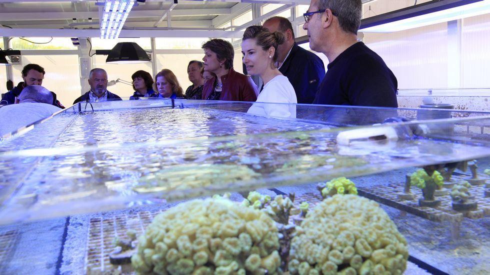 Una granja de corales en Viveiro