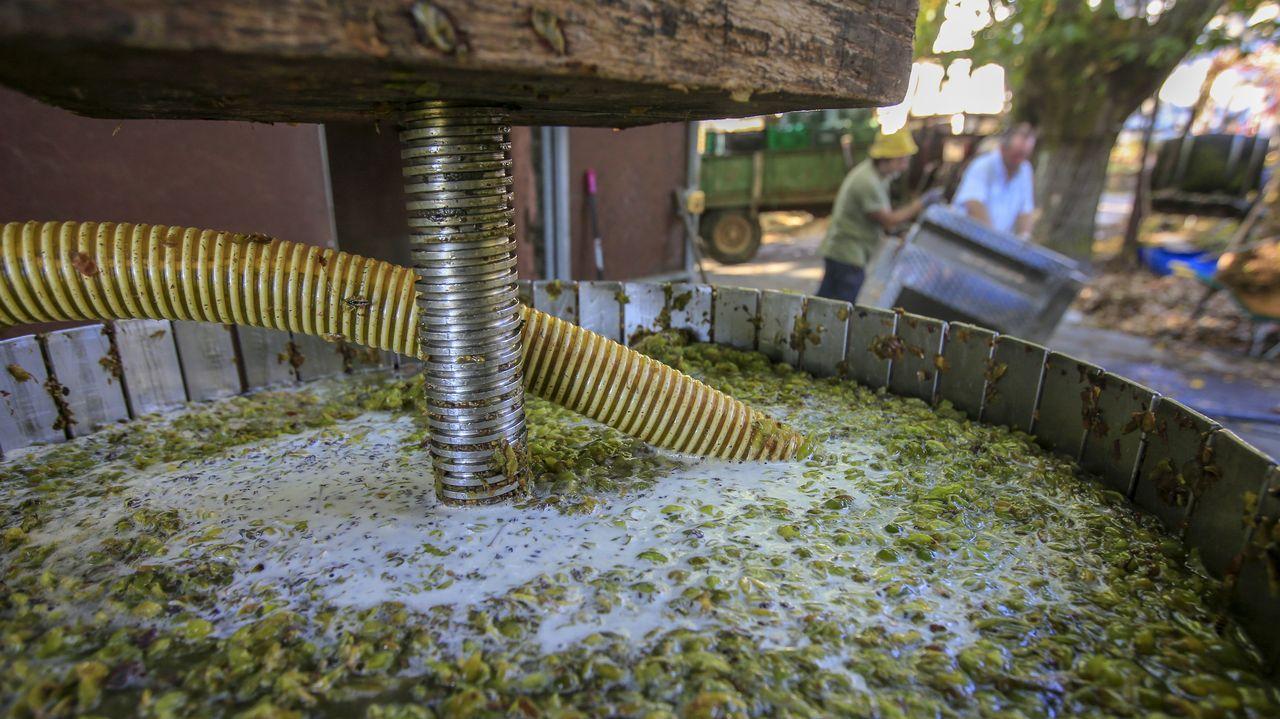 El mosto del vino blanco se bombea a los depósitos después del prensado de la uva