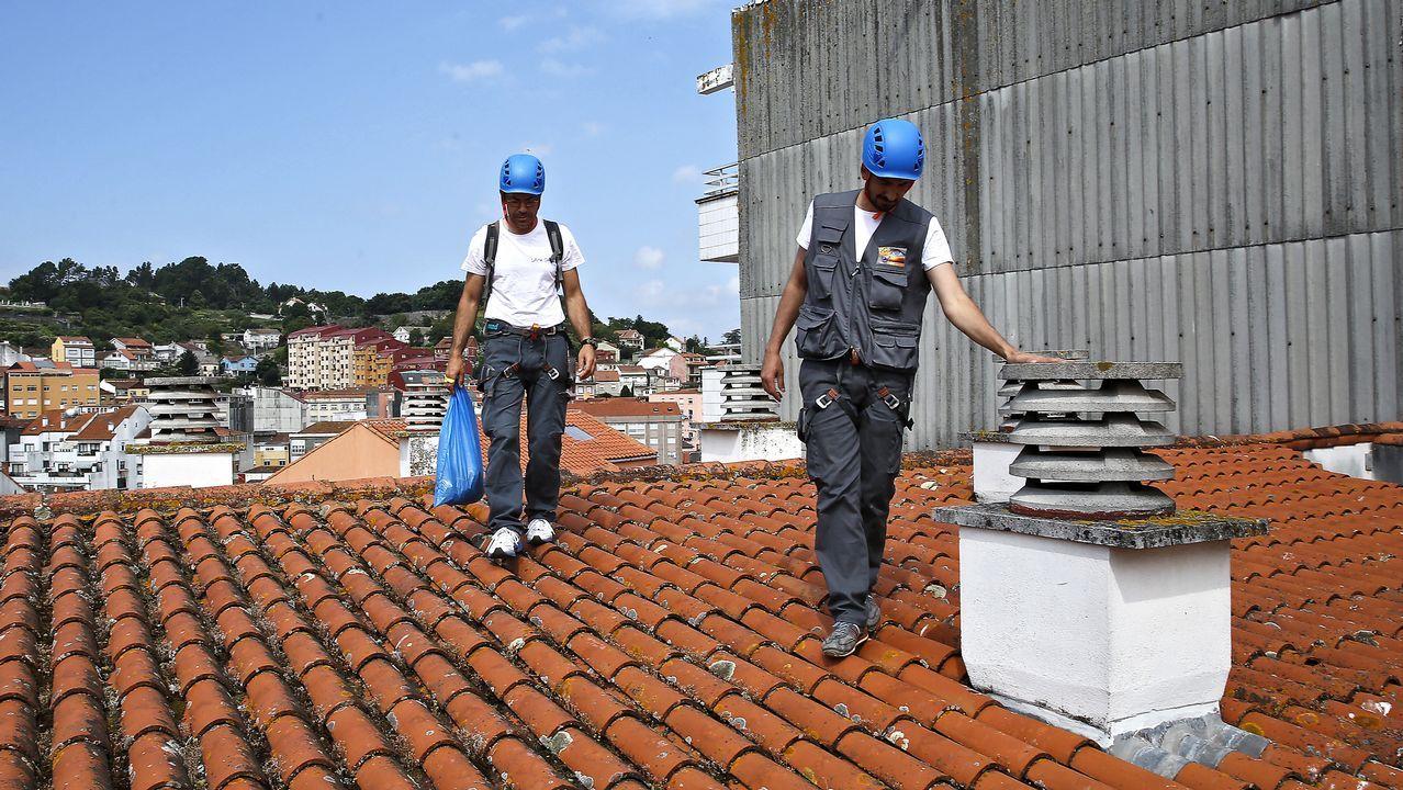 Guardianes de los tejados contra gaviotas