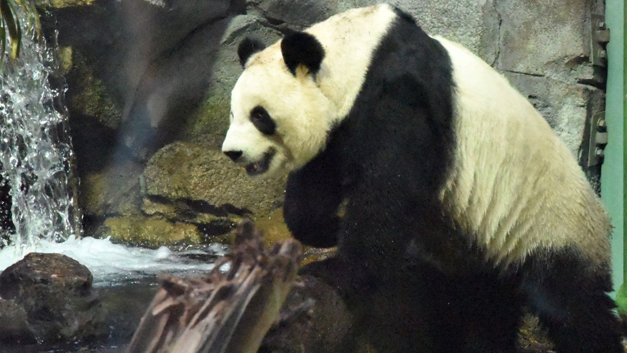 Los «cazafantasmas» del virus desinfectan por el mundo. Yaije Bao y Weilian Xia, en su restaurante chino de Ourense