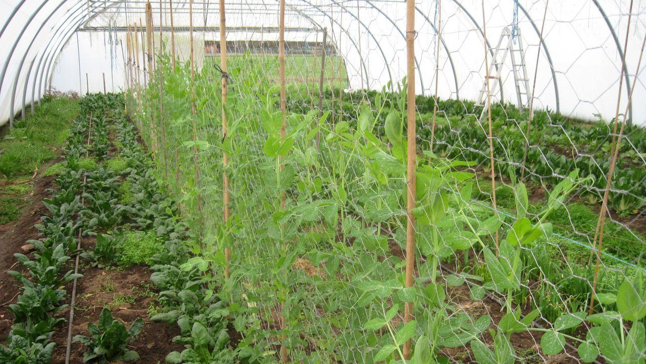 zona rural Oviedo parroquia San Claudio.Daniel López cultiva diversas hortalizas al aire libre y en invernadero