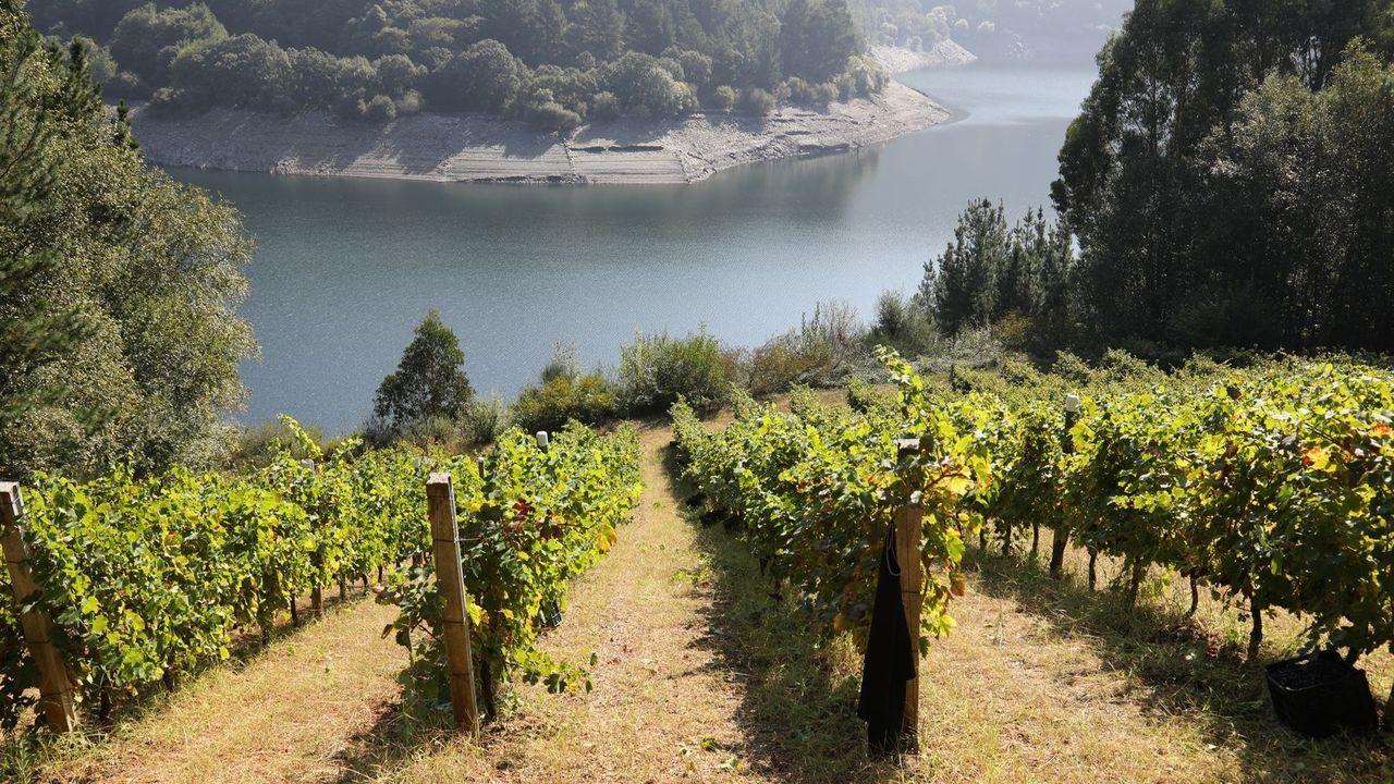 Viñedos en Negueira de Muñiz, donde la viticultura está mecanizada