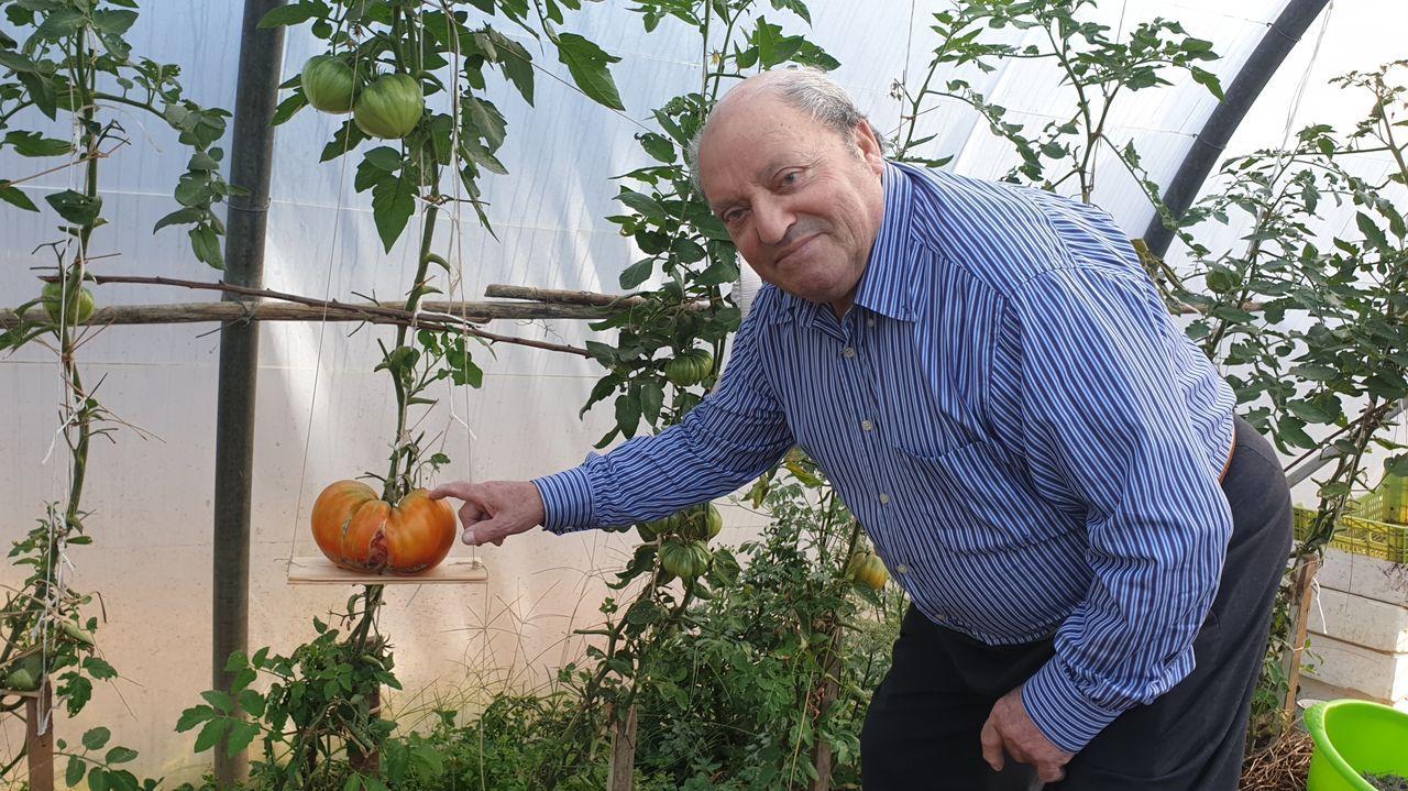 Ángel de la Tierra posa con su tomate de 2 kilos.
