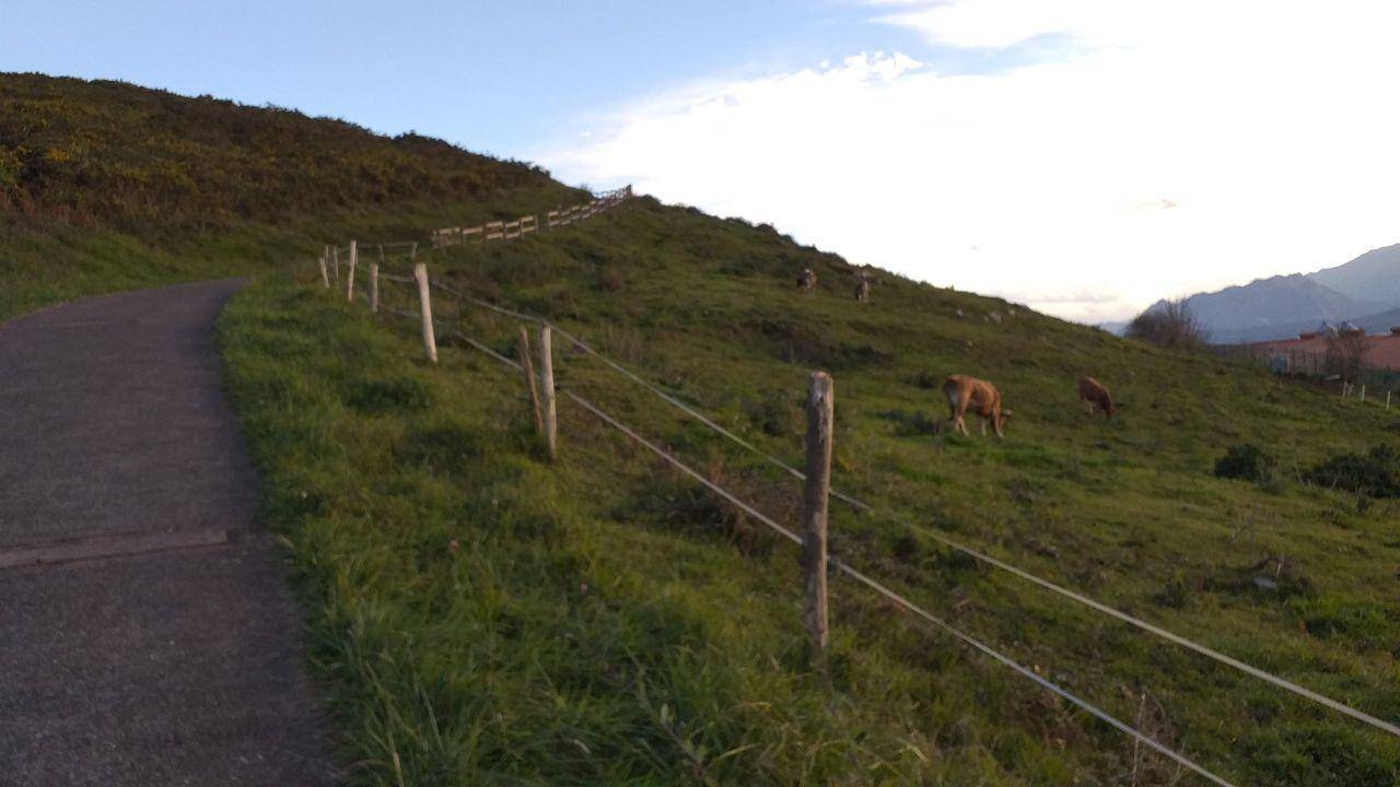 Cómo proteger los colmenares de los ataques de osos con pastores eléctricos.Plantación de lúpulo en el Centro de Investigacións Agrarias de Mabegondo