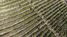 Imagen de la vendimia en los bancales de la Ribeira Sacra captada desde un dron