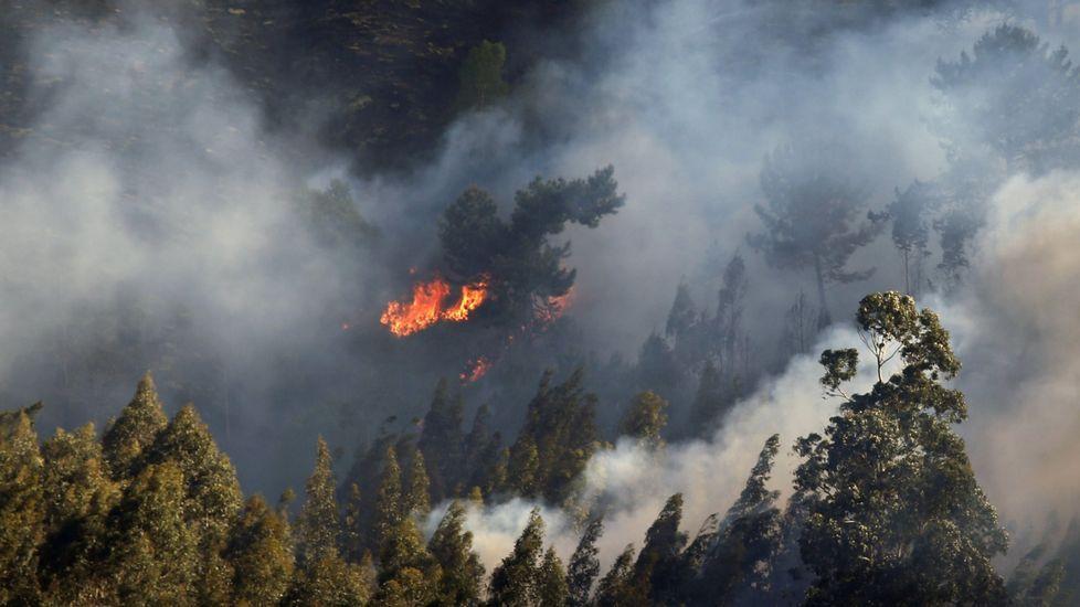 Moix insiste en que dimite para proteger a su familia.Uno de los incendios forestales registrado en el concejo asturiano de Llanes y en cuya extinción están trabajando los Bomberos del Servicio de Emergencias del Principado (SEPA).