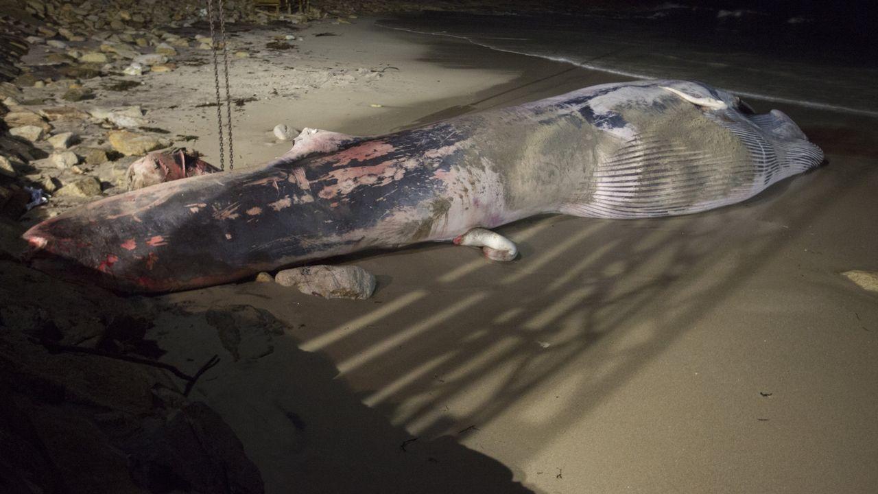 Ballenas.No son muchas las oportunidades de ver ejemplares de este tipo en las costas de Coruña