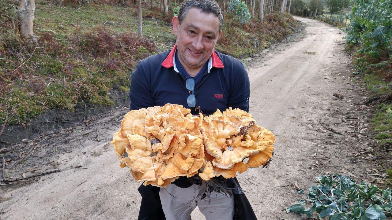 La seta de diez kilos con sabor a pechuga de pollo que apareció en el monte Acibal
