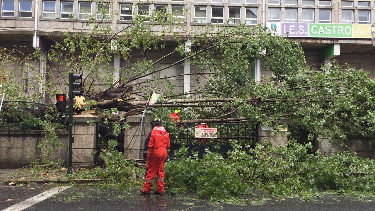 Este fue el momento en el que cayó el árbol en Vilagarcía