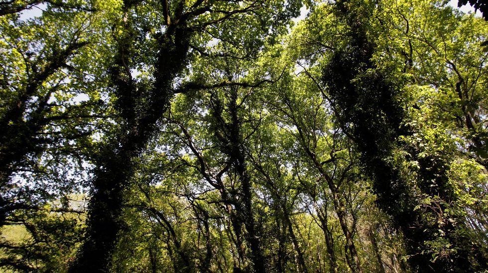 O bosque animado é unha fraga tan espesa que as árbores teñen que loitar unhas coas outras para recibir a luz do sol