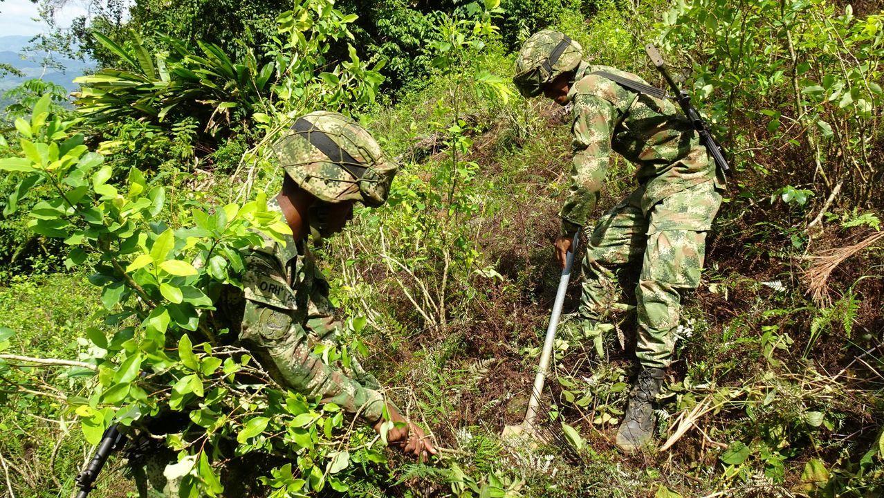 Soldados colombianos destruyendo plantas de coca