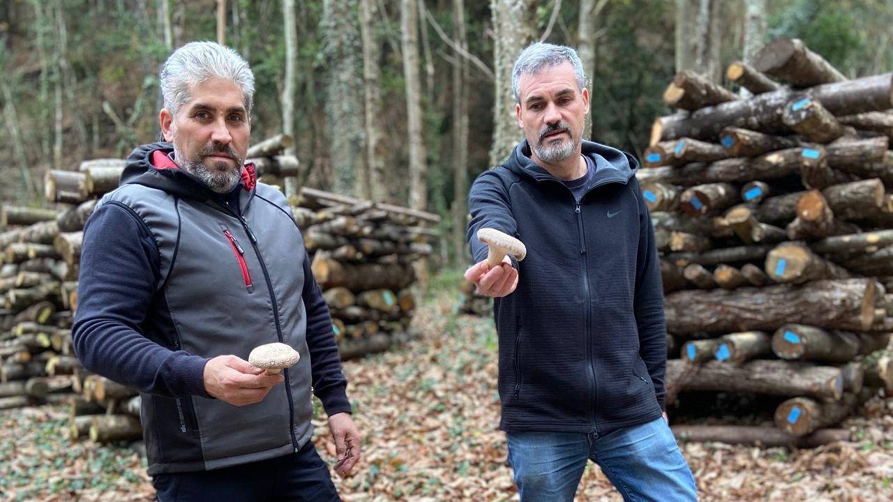 Pedro Rodil y Jesús López trabajan en un proyecto conjunto en un monte de Remourelle, Ribadeo