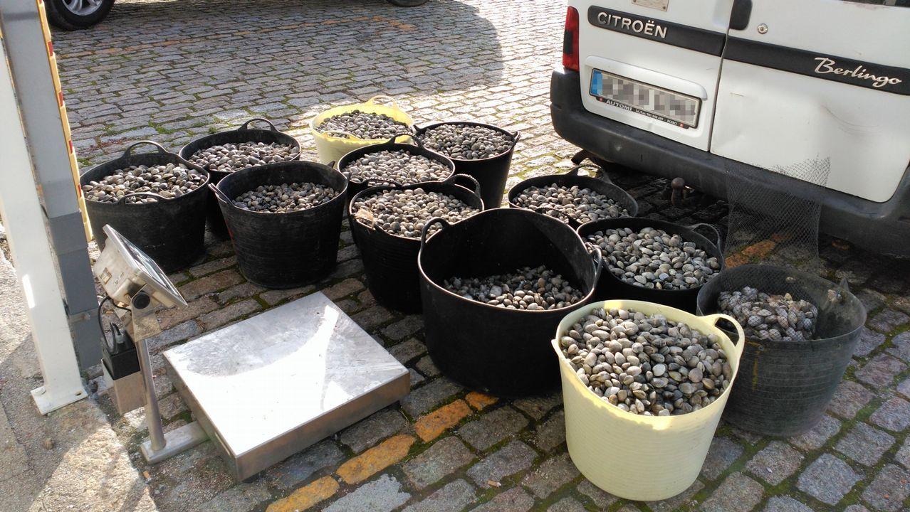 Diez toneladas de almeja intervenida y más de veinte empresas investigadas por la comercialización ilegal de marisco portugués.La polémica del buceo en apnea llegó al Parlamento Galego