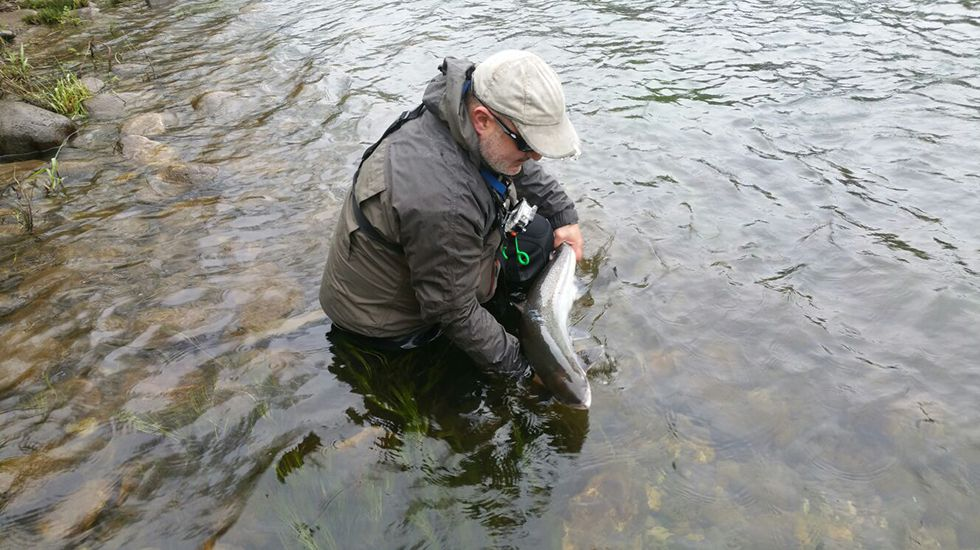 Suelta de un salmón en el Narcea